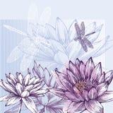 Fundo floral com os lírios de água de florescência e o d ilustração do vetor