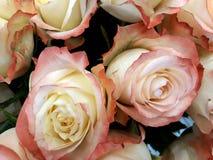Fundo floral com rosas de chá Imagem de Stock Royalty Free