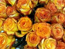 Fundo floral com rosas de chá Imagens de Stock
