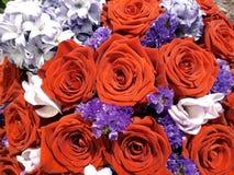 Fundo floral com rosas vermelhas e jacintos foto de stock royalty free