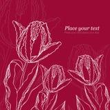 Fundo floral com tulips Imagem de Stock