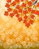 Fundo floral com uma filial de árvore Fotos de Stock Royalty Free