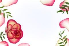 Fundo floral com a uma flor em botão cor-de-rosa Imagens de Stock Royalty Free
