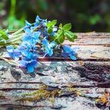 Fundo floral com violeta da floresta Fotografia de Stock Royalty Free
