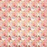 Fundo floral cor-de-rosa botânico das rosas do estilo sujo antigo do vintage na madeira Imagens de Stock Royalty Free
