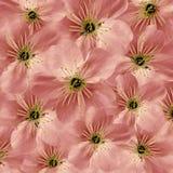 Fundo floral cor-de-rosa Grande cereja branca das flores colagem floral Composição da flor Fotografia de Stock