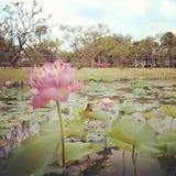 Fundo floral da arte com o efeito da textura filtrado Imagem de Stock Royalty Free