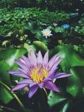 Fundo floral da arte com o efeito da textura filtrado Fotos de Stock Royalty Free