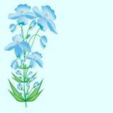 Fundo floral da flor azul Imagem de Stock