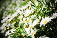 Fundo floral da flor Garden Fotografia de Stock Royalty Free