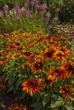 Fundo floral da flor Garden Fotografia de Stock