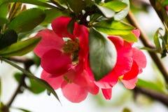 Fundo floral da flor Garden Foto de Stock