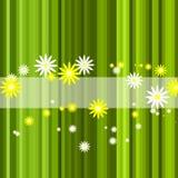Fundo floral da listra verde abstrata Foto de Stock Royalty Free
