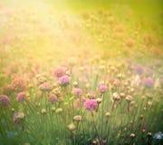 Fundo floral da mola