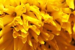 Fundo floral da mola Fotos de Stock