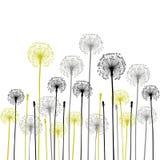 Fundo floral, dente-de-leão Foto de Stock