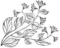 Fundo floral do doodle abstrato Fotografia de Stock Royalty Free