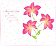 Fundo floral do fundo da flor isolado Imagem de Stock