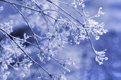 Fundo floral do inverno Foto de Stock Royalty Free