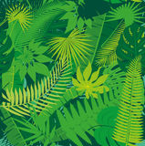 Fundo floral do teste padrão da selva tropical sem emenda bonita com folhas de palmeira diferentes Fotos de Stock Royalty Free