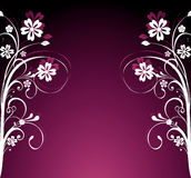 Fundo floral do verão Imagens de Stock Royalty Free
