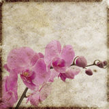 Fundo floral do vintage Fotos de Stock Royalty Free