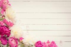 Fundo floral do vintage, quadro floral com peônias Imagem de Stock Royalty Free