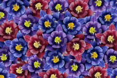 Fundo floral flores Azul-roxo-violetas colagem floral Composição da flor Imagens de Stock Royalty Free