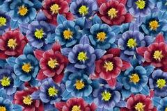 Fundo floral flores Azul-turquesa-vermelhas colagem floral Composição da flor Imagem de Stock