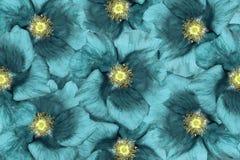 Fundo floral Flores de turquesa colagem floral Composição da flor Fotografia de Stock Royalty Free