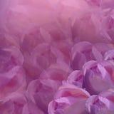 Fundo floral Flores no fundo cor-de-rosa Rosas luz rosa das flores colagem floral Composição da flor Imagens de Stock