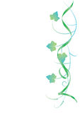Fundo floral, hera Fotografia de Stock Royalty Free