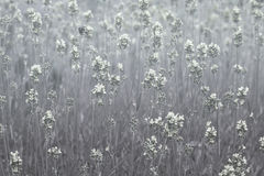 Fundo floral monocromático Imagens de Stock