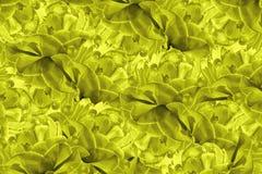 Fundo floral O amarelo floresce tulipas colagem floral Composição da flor Imagem de Stock