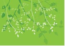 fundo floral, ornamento Foto de Stock