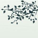 Fundo floral, pássaros Imagem de Stock Royalty Free