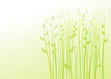 Fundo floral, prado, jardim Fotos de Stock