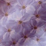 fundo floral Roxo-branco Grande cereja branca das flores colagem floral Composição da flor Foto de Stock