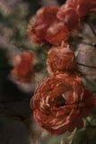 Fundo floral textured grunge envelhecido ilustração do vetor