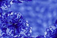 Fundo floral tulipas Azul-brancas das flores colagem floral Composição da flor Foto de Stock Royalty Free
