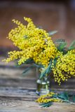 Fundo floral: um ramo da mimosa no fundo de madeira natural, copyspace para seu texto: modelo, fundo para cumprimentos Imagens de Stock