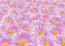 Fundo floral violeta Fotografia de Stock