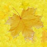 Fundo, folhas coloridas Foto de Stock Royalty Free