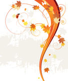 Fundo, folhas e joaninha do teste padrão do outono Fotos de Stock Royalty Free
