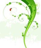 Fundo, folhas e joaninha verdes do teste padrão ilustração stock
