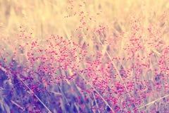 Fundo fresco da natureza do verão da mola da flor cor-de-rosa pequena da grama Imagens de Stock