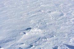 Fundo fresco da neve Fotos de Stock