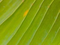 Fundo fresco da textura da folha Imagens de Stock