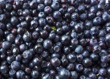 Fundo fresco da uva-do-monte Mirtilos da textura fotos de stock