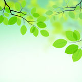 Fundo fresco das folhas Imagens de Stock